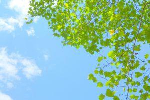 東京で樹木葬をするなら知っておきたい、お墓参りの仕方