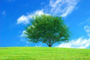 樹木葬と散骨には違いがあるのか